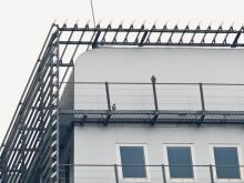 slechtvalken op het HNK-gebouw, november 2015